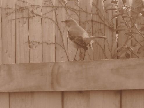 one catbird